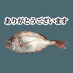 tai fish 4