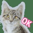 彩色鉛筆貓