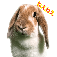 Rabbit Mimi-chan cute sticker