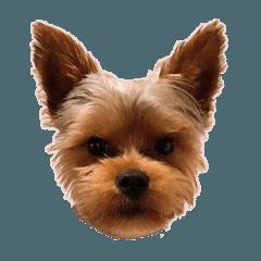 Pet Dog Sora-kun