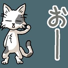 I love cats! Part29b (tabby)