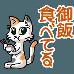 I love cats! Part29c (calico)