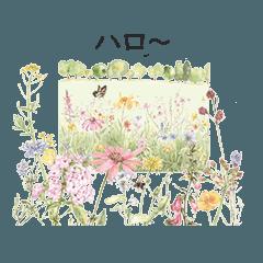 gentle colored flowers greetings