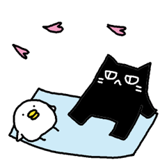 Black cat and white chicken