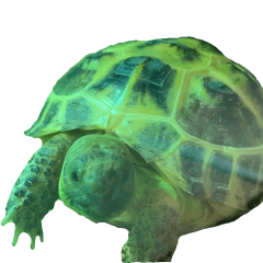 Puchiko_tortoise