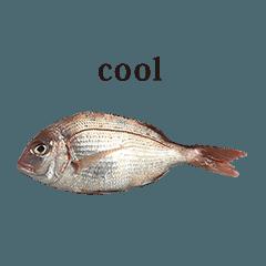 tai fish 5