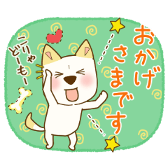 WHITE SHIBA DOG KOTARO8