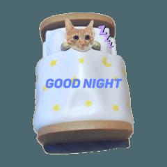 my cat chaoz_20200329