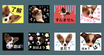 Momo_20200402021635