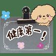 トイプードル(アプリコット)【気遣い編】