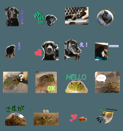 Labrador &Wells frog