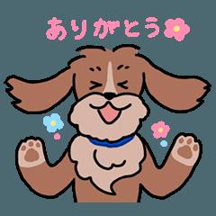 ミックス犬のブラン