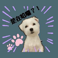 Lucky's dog life