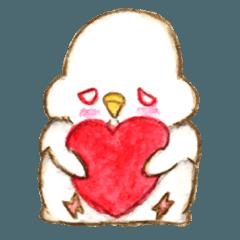 Budgerigar chicks
