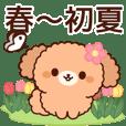 ぽかぽかトイプードル(春~初夏)