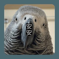 kochuuu_202004067522