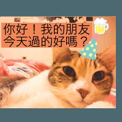 咪咪師傅之MeWe 副董