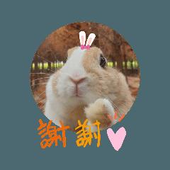 Bunny x Bunny