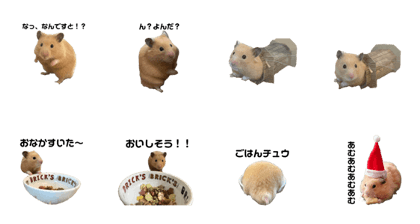 hamster life of eating