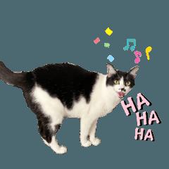 Chaokuay Fat Cat