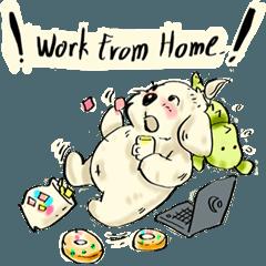 fat dog work home