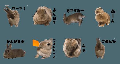 Rabbit Maki sticker