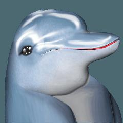 Dolphin : HA HA HA