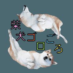 shibainu hinata pretty daily life