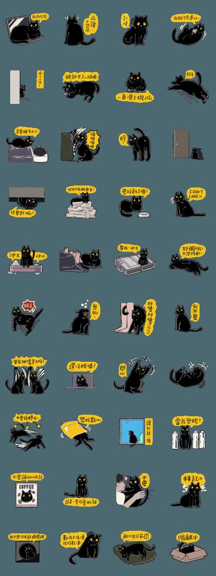 Exotropia Cat-Basement cat