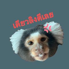JiwLiw_Hayyin Little Monkey