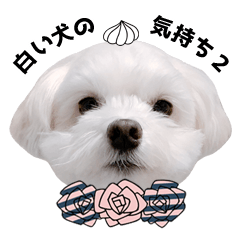 White dog feeling 2