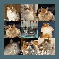 shinji_20200405083906