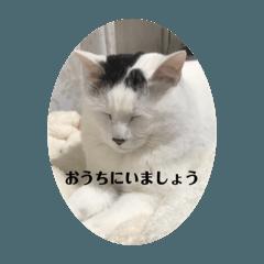 kagemomo_20200406194444