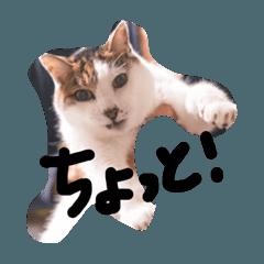 momimutsu_20200405210449