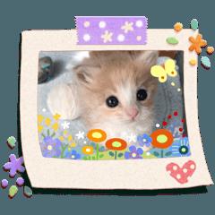 sakura mama_20200407132819