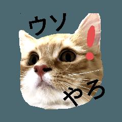 Shiyo_20200407124245