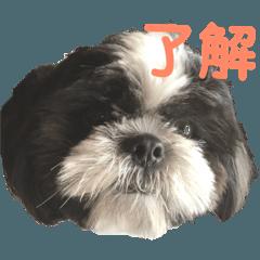 sizu dog syochan3