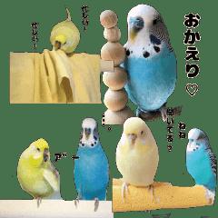 kawaiiインコちゃん`s