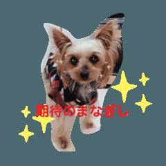 may.dog!