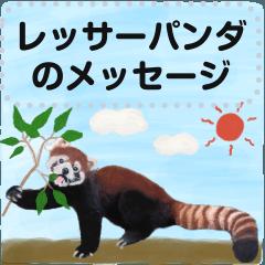 Pretty lesser panda