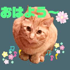 猫のスタンプ ちーちゃん2