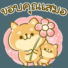 mameshiba days(thai)