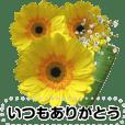 心に届け!祝福&感謝の花束メッセージ