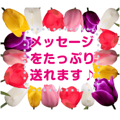 Spring message cherry blossoms & tulips