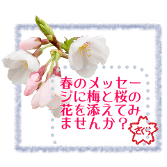 Spring message plums & cherry blossoms