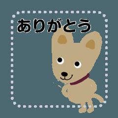 Dog koro 2