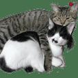 nico,mimi-cats