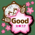超可愛喵喵貓日記2