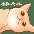 Cat!Cat!!Cat!!!!