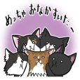 KANSAI- dialect CATS